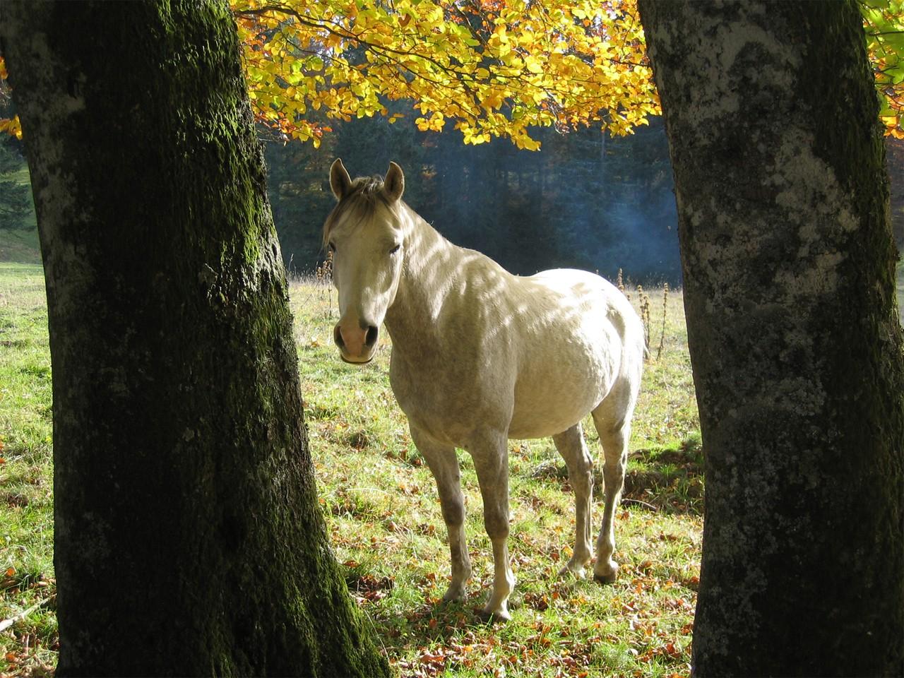 Stadnina koni w Jaroszówce