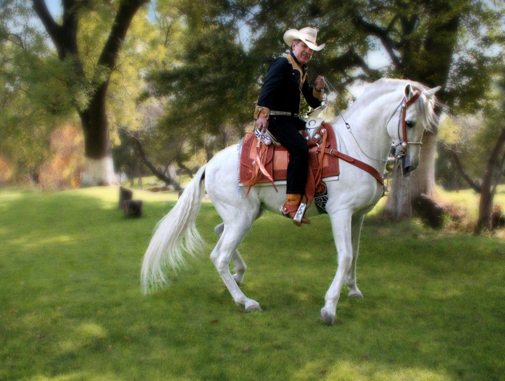 Koń miękki a koń twardy