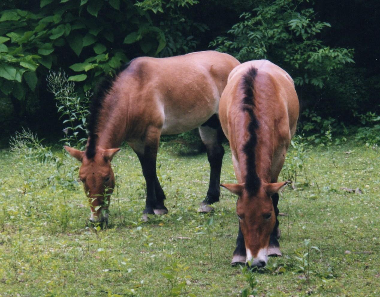 Trzy rodzaje wyścigów konnych