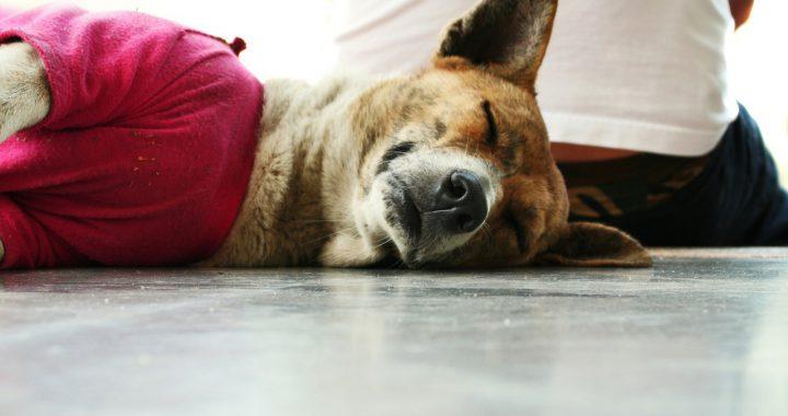 Co brać pod uwagę przy wyborze zwierzaka do domu?